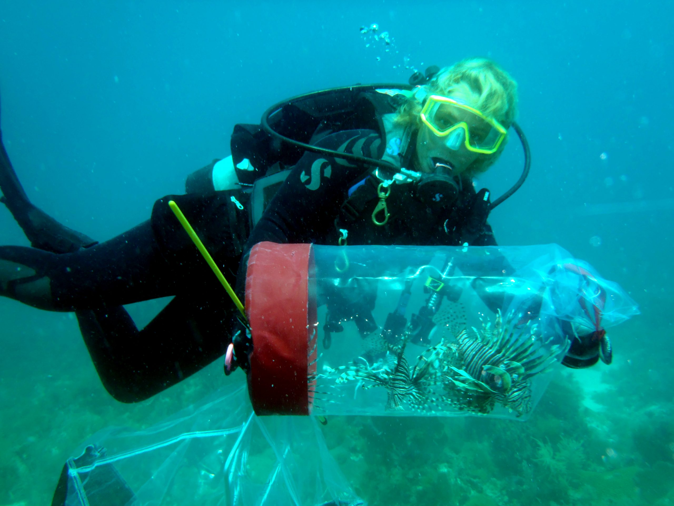 kml-diving-collections-lionfish